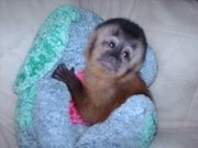 desired monkey for new home